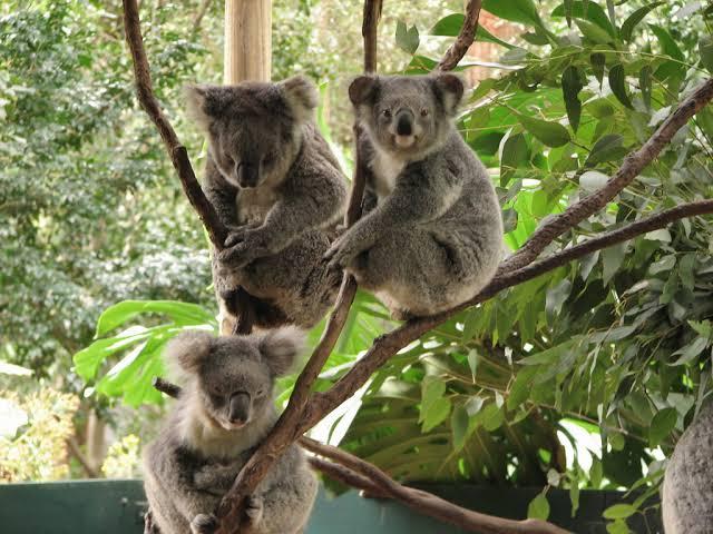 koala-park-local-attraction